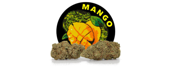 Mango Diesel CBD